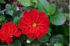 Kostenlose Bild Natur Blumen Flora Garten Blatt