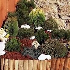 arbustes nains pour rocaille conifere rocaille