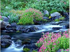 Free Images Online: spring desktop wallpaper