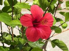 pflanze mit roter blüte die gro 223 e rote bl 252 te foto bild pflanzen pilze
