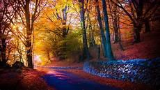 Nature Path 4k Wallpaper by Autumn Forest Path 4k Ultrahd Wallpaper Wallpaper Studio