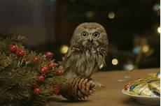 mimi migros gif mimi migros weihnachten discover