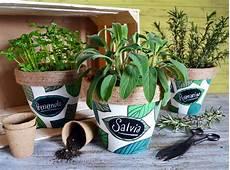 viridea vasi vasetti per erbe aromatiche viridea