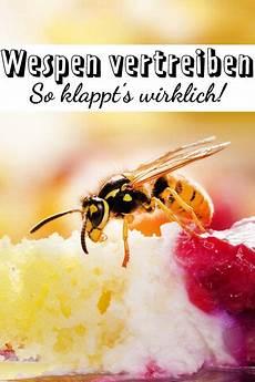 wespen vertreiben welche hausmittel helfen wirklich