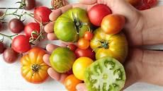 Wie Gesund Sind Tomaten - tomaten sind gesund und lecker ndr de ratgeber
