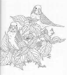 coloring pages of nature for adults 16381 harmony of nature coloring book pg 10 bird coloring pages coloring books coloring