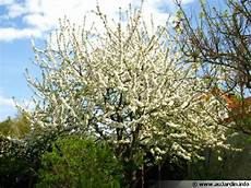 Tailler Le Cerisier