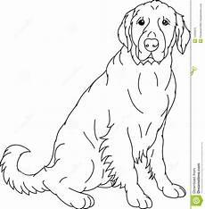 labrador retriever stock vector illustration of