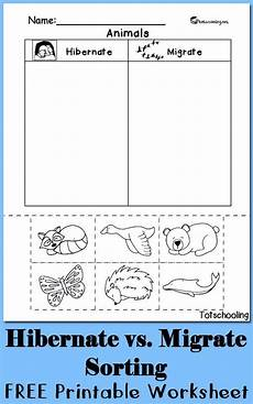 animals in winter worksheets for kindergarten 14199 hibernation vs migration animal sorting worksheet kindergarten activities kindergarten
