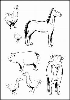 farm animals and their babies coloring pages 17434 7 best farm animals colouring images on animal coloring pages children coloring