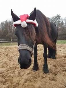Ausmalbilder Pferde Im Winter So Bringst Du Dein Pferd Gesund Fit Unverletzt Durch