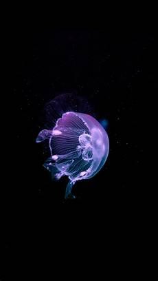 iphone x wallpaper jellyfish jellyfish iphone wallpaper background iphone wallpaper