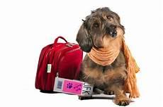 famille d accueil pour chien pendant les vacances faire garder chien en pension tout ce qu il faut savoir sur les chiens