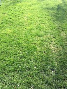 Rasen Mähen Vor Dem Winter - wann rasen richtig vertikutieren anleitung f 252 r hobby
