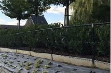 Cout Cloture Jardin Fil De Cloture Pour Le Jardin Informations Avantages Prix