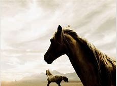 Free Horse Wallpapers For Computer   Wallpaper Cave
