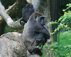beleidigte leberwurst bilder beleidigte leberwurst foto bild tiere zoo wildpark