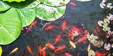 Poisson Pour Bassin De Jardin