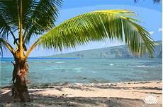 Hawaiian Backdrop