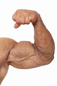 study finds troubling link between use of muscle building supplements and cancer toronto star