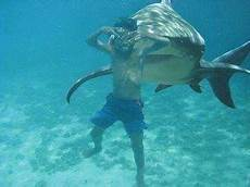 Unterwasser Tiere Malvorlagen Instagram Pin By Danny Seay On Sharks Shark Shark Pictures Shark