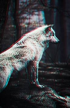 black and white wolf wallpaper iphone wolf iphone wallpaper gallery