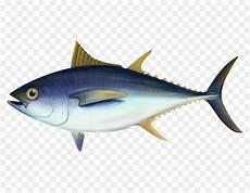 Gambar Ikan Tuna Png Gambar Ikan Hd