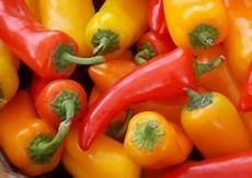 peperoni in vaso vendita piantine peperoni prezzo ed offerte