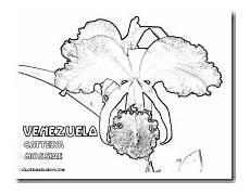 dibujos de la flor nacional de venezuela colorear flor de mayo flor nacional de venezuela