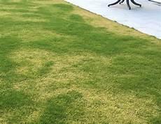 Ist Der Rasen Zu Retten Fr 252 Hling Rasenpflege