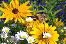 Malvorlage Biene Und Blume File Blume Mit Schmetterling Und Biene 1uf Jpg Wikimedia