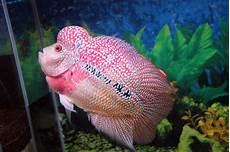 Foto Ikan Hias Laut Holidays Oo