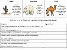 animal worksheets 4th grade 13886 adaptation handout review aid teaching resources
