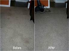 removing pet stains on carpet tips tricks