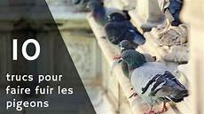 R 233 Pulsif Pigeons Voici 10 Trucs Pour Faire Fuir Et Faire