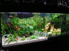 The Inspiring Of Ideas For Aquarium Dcor With White Sand