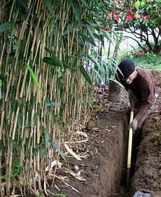 barrière anti racine bambou barri 232 re anti rhizome pour ma 238 triser le bambou et les