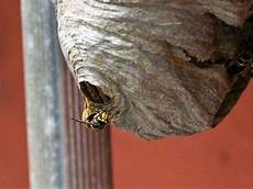 wespennest entfernen was kostet es myhammer preisradar