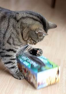 katzenspielzeug selber basteln katzenspielzeug diy for my babies katzenspielzeug