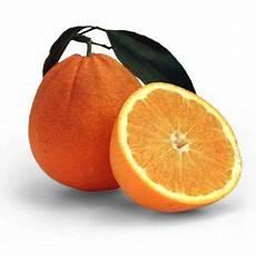 Orangen Frisch Nach Hause - bio orangen aus sizilien frisch geerntetes mit