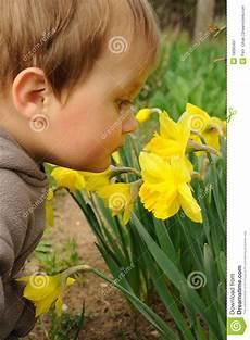 bambino sente l odore di fiori sententi l odore bambino immagine stock