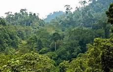 Kumpulan Gambar Hutan Hujan Tropis Alamendah S