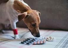 anti inflammatoires pour chien utilit 233 et alternatives