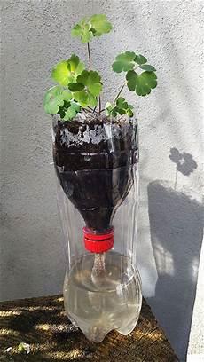 zimmerpflanzen im urlaub bewässern bew 228 sserungssystem pet flasche ideal f 252 r die aussaat und