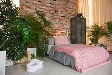 Welche Pflanze Produziert Am Meisten Sauerstoff - pflanzen im schlafzimmer fluch oder segen