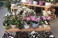 prezzo fiori fiori per compleanni feste e anniversari a belluno