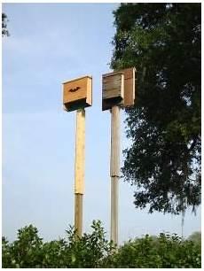 bat conservation international bat house plans where to place a bat house obc bat house bat house