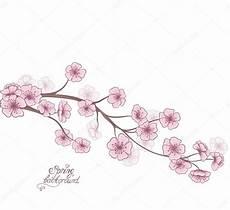 fleur de cerisier dessin 孤立在一张白纸的盛开的樱花分支 装饰春季花卉背景 手绘矢量图 图库矢量图像 169 marina99 41290573