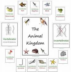 animal kingdom worksheets middle school 13932 free animal kingdom notebooks worksheets printables for pre k to second grade biolog 237 a