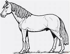 Pferde Ausmalbilder Ausdrucken Kostenlos 99 Das Beste Ausmalbilder Pferde Zum Ausdrucken
